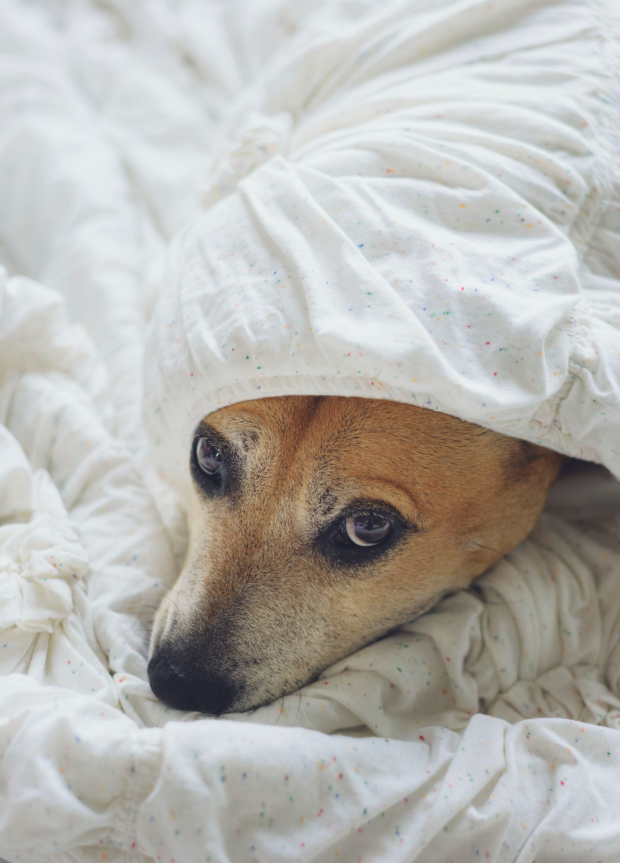 Perchè i cani hanno paura del temporale?