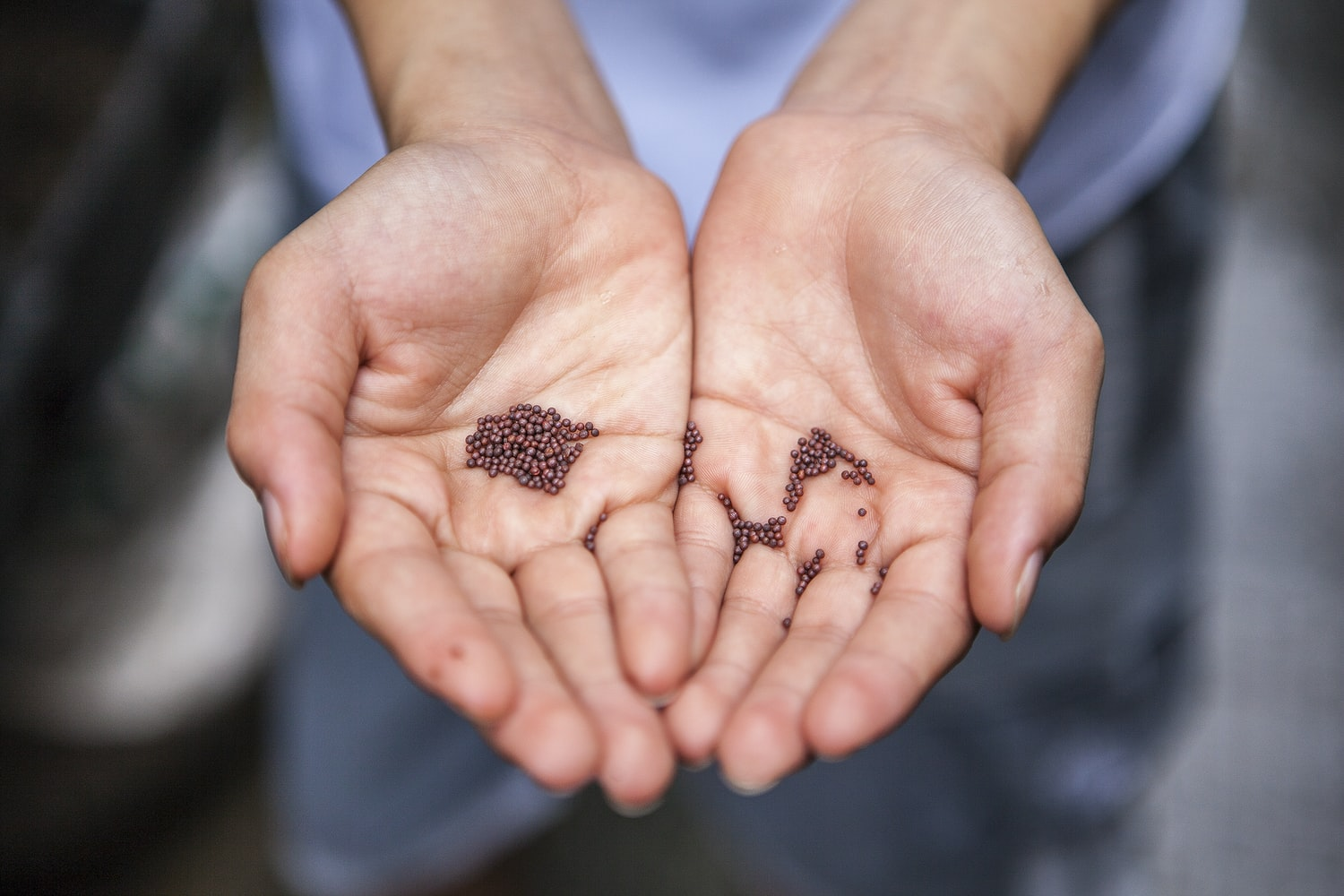 seeds in the palms