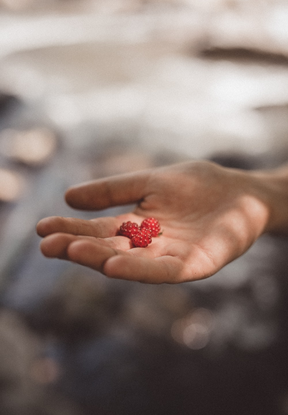 person holding three red fruits in focus photography