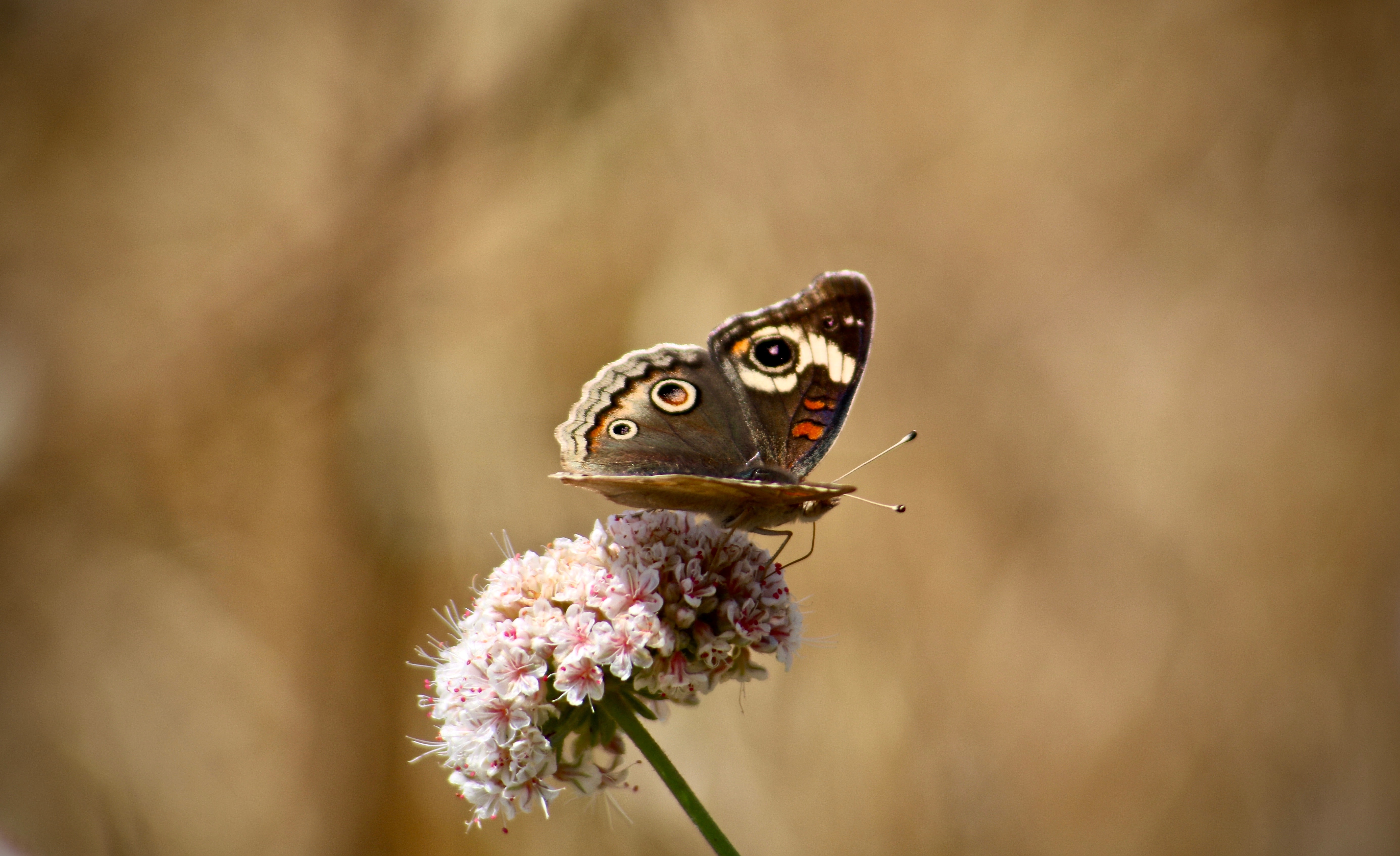close-up photo of butterfly perching on pink petaled flower