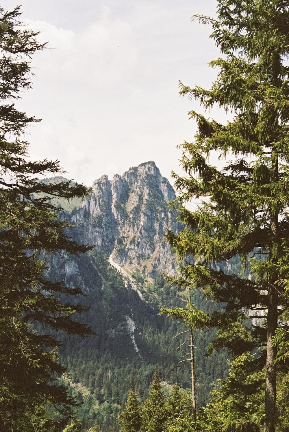 mountain with trees photo