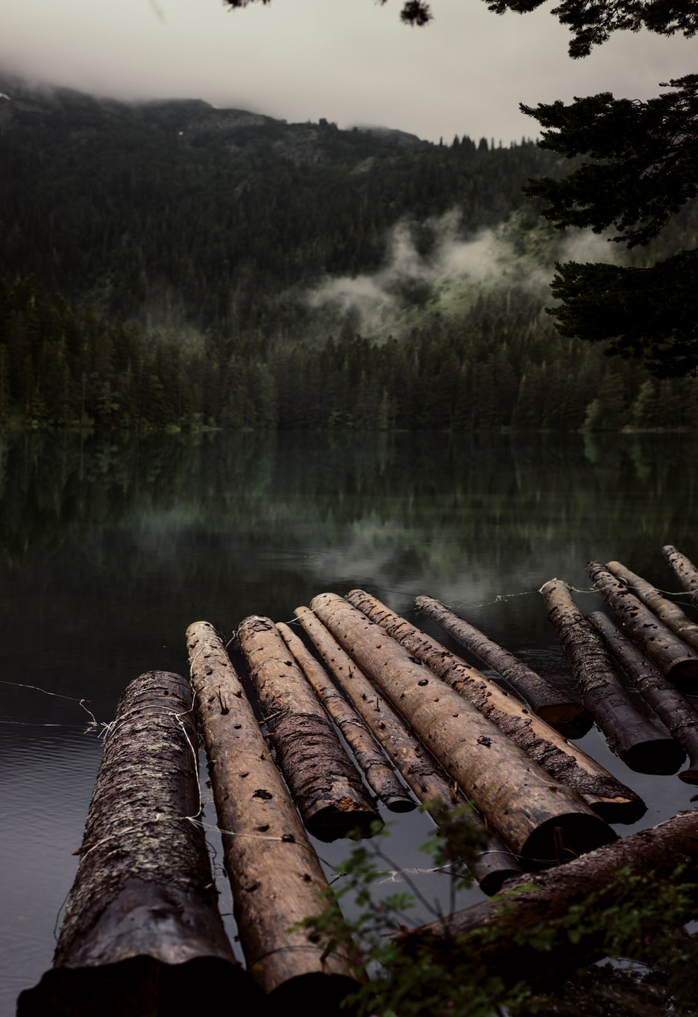 chopped logs on water