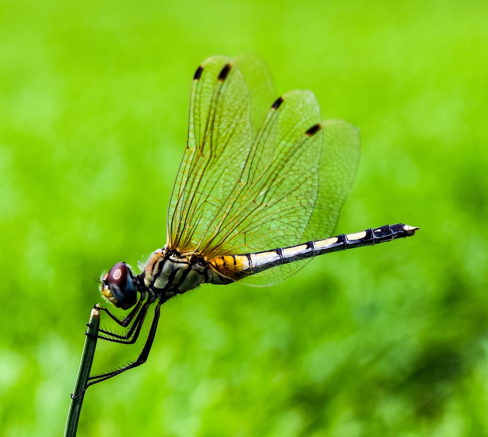 shallow focus photography of dragonfly