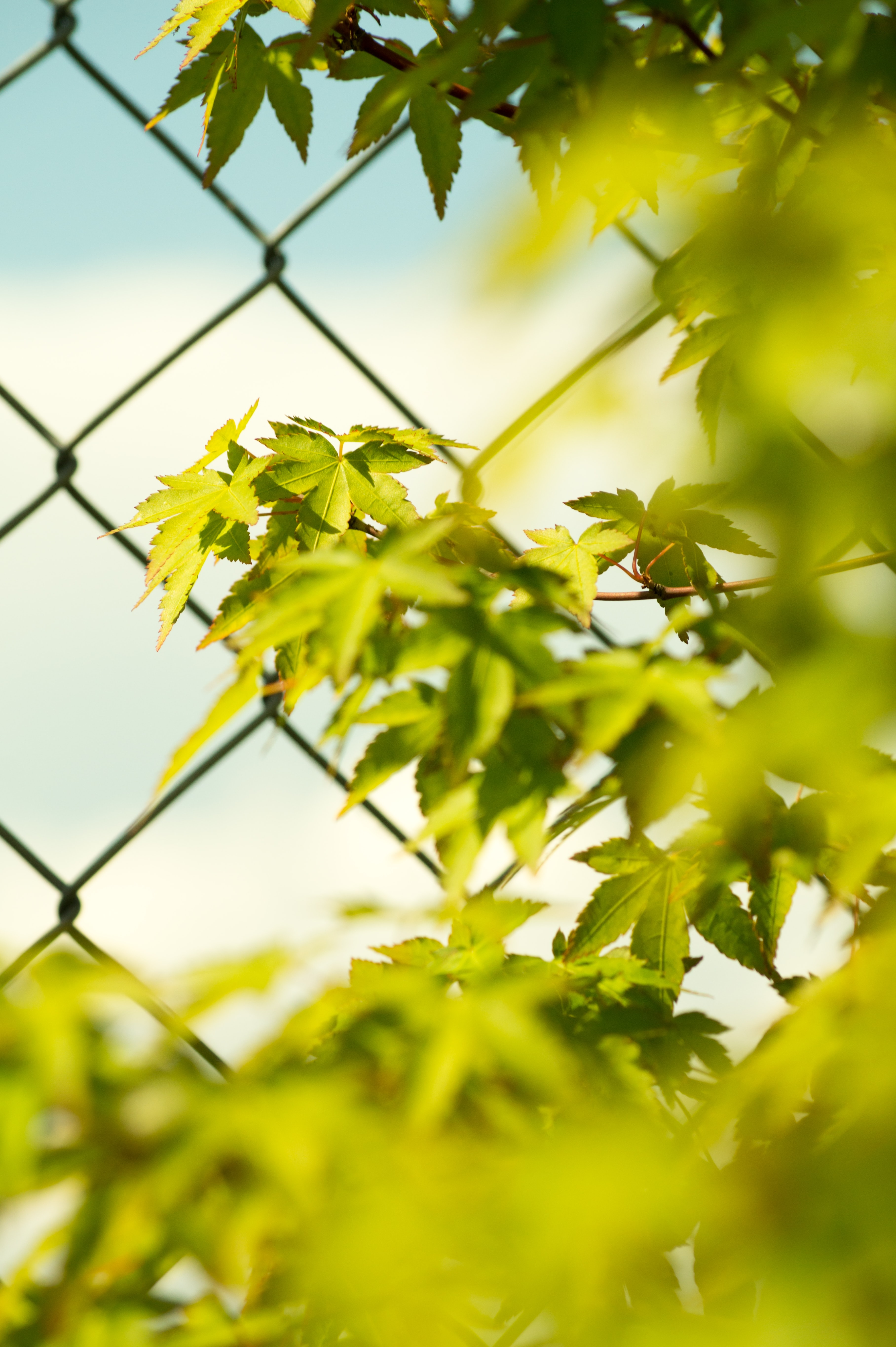 close up photography of green leafed plant beside wire fence