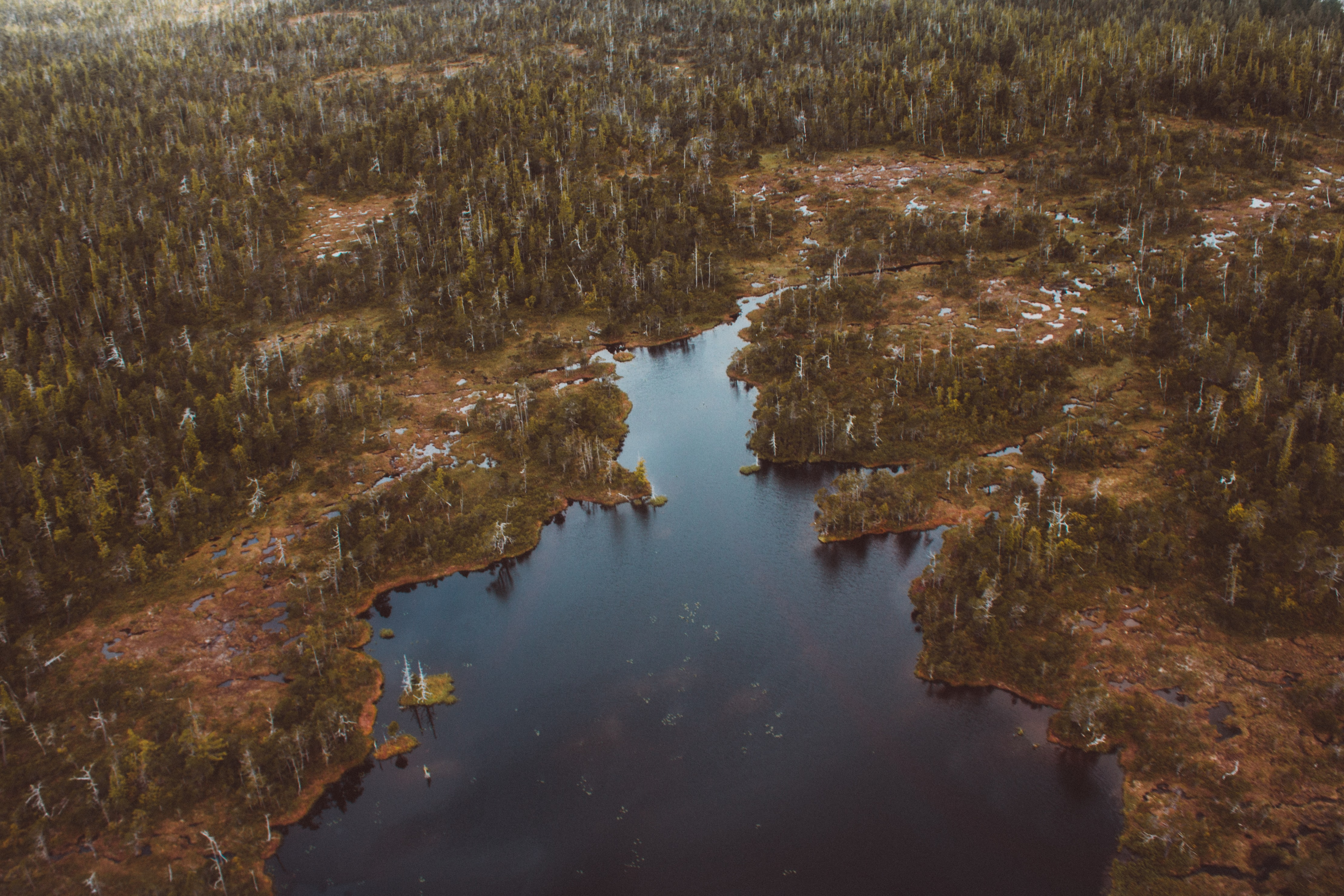 aerial photography of lake surrounded with trees at daytime
