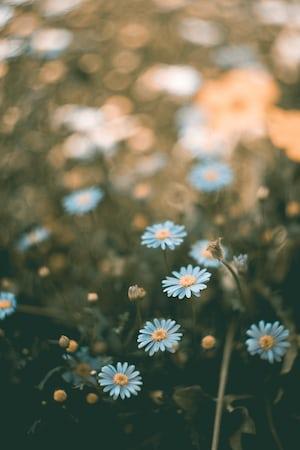 3964. Virágok