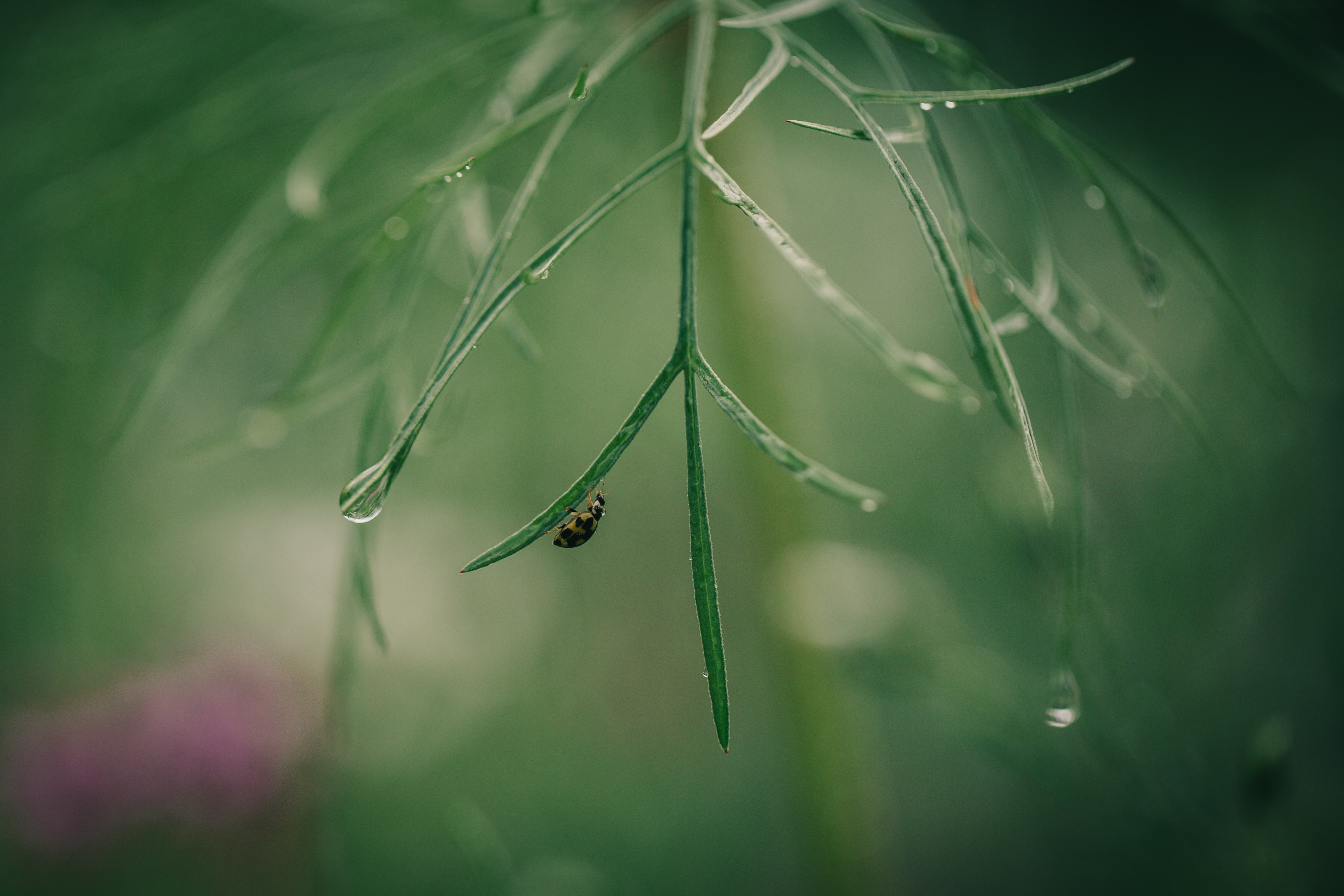 black insect on green grass