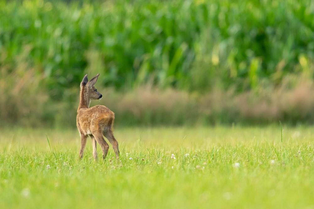 brown four-legged animal on grass field