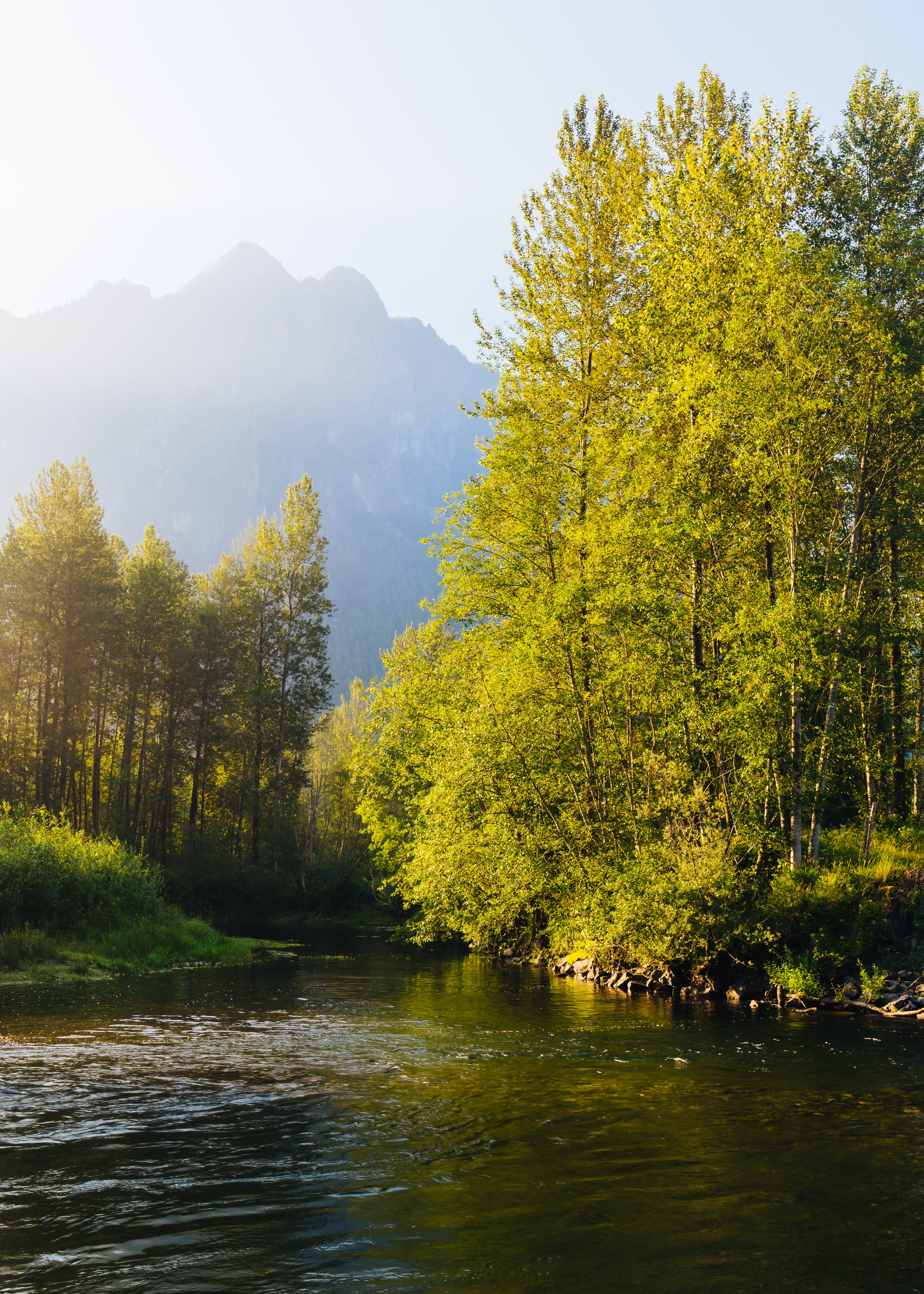 photo of river between forest