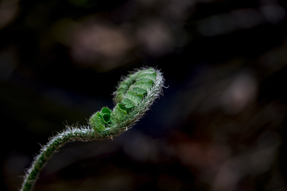 selective focus photography of fern