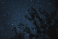 photo of leafed tree during night time