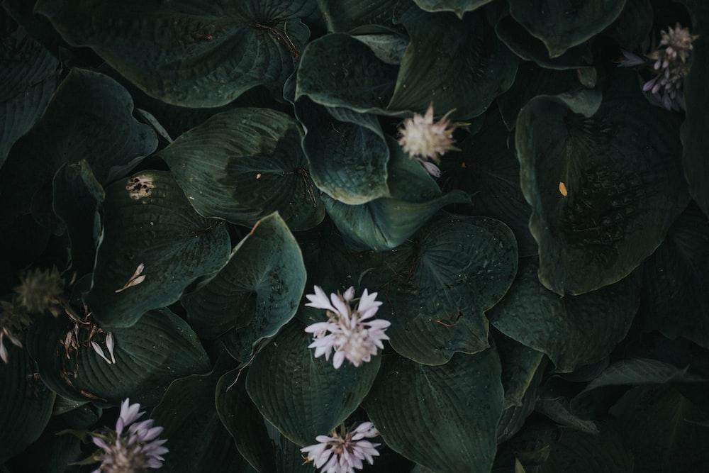 white petal flower plants