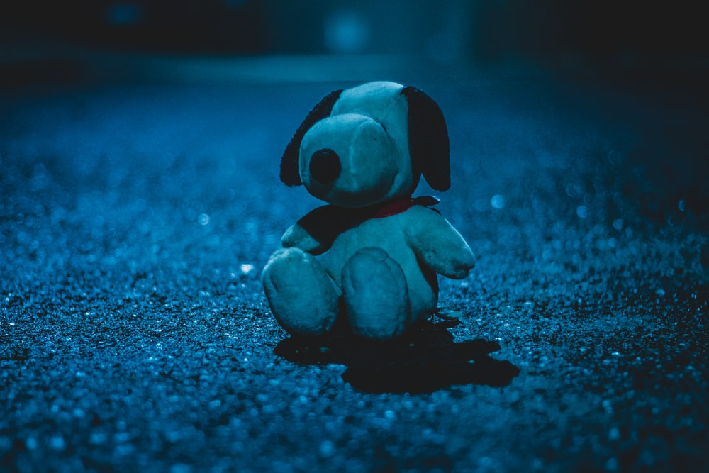 white dog plush toy on sandy ground at nighttime