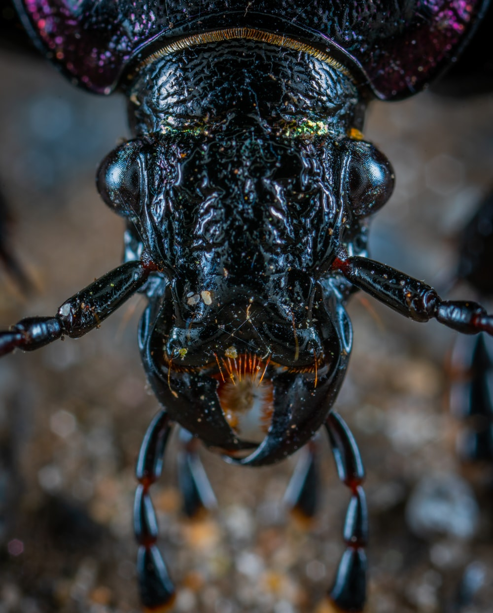 macro photography of insect head