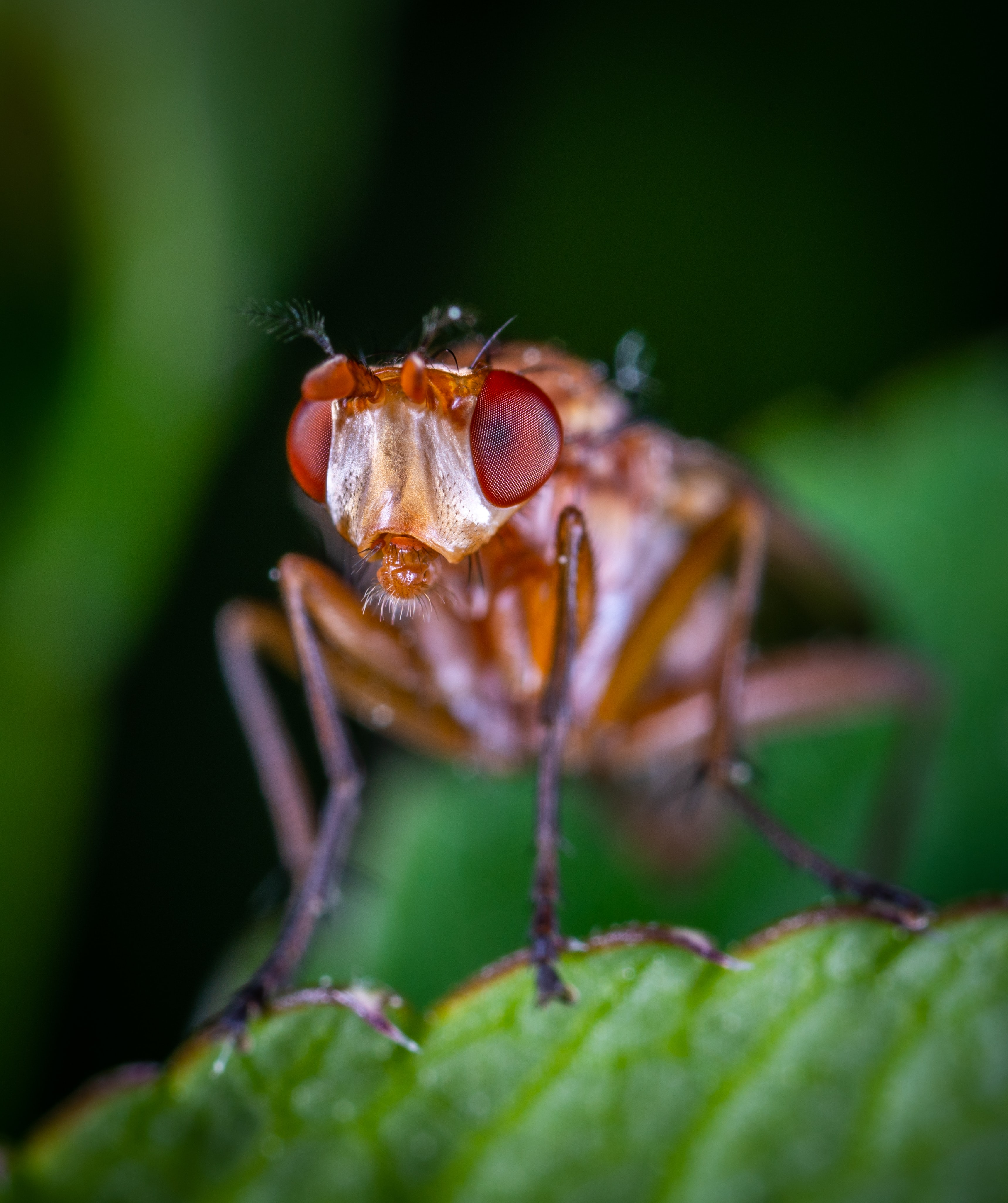 closeup photo of brown insect