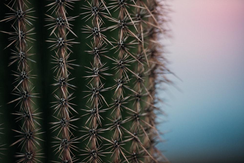 close-up photo of cactus plant