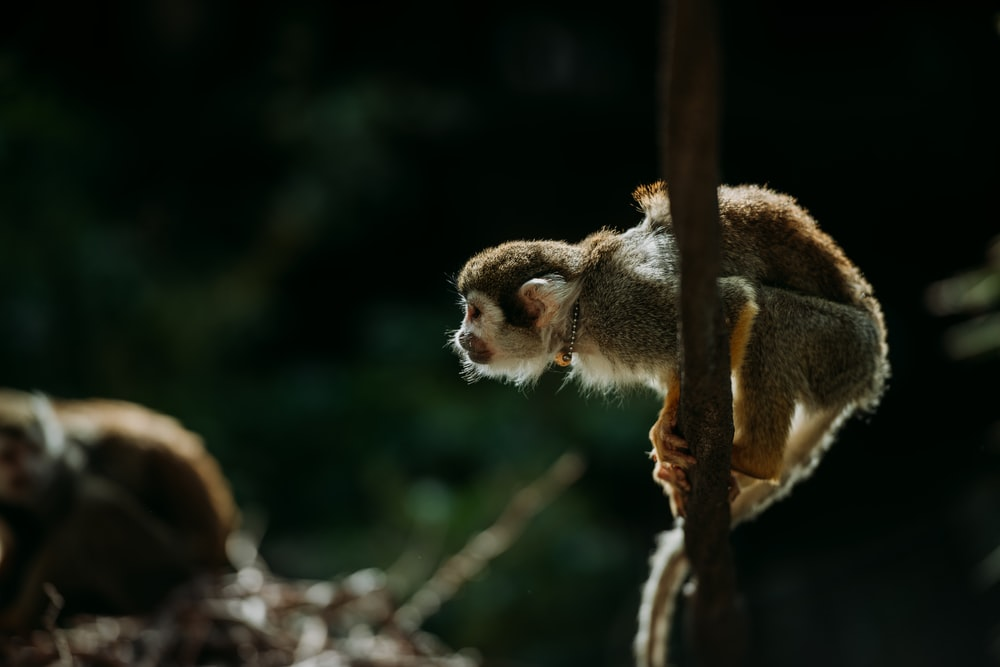 brown monkey standing on brown branch