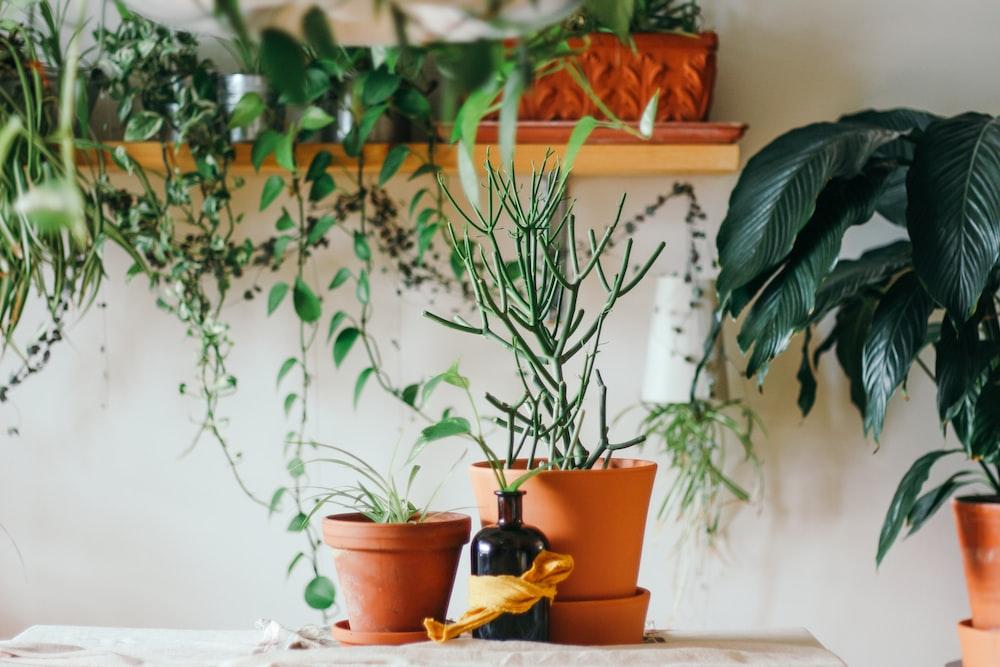 Balkonda Bitki Yetiştirmek