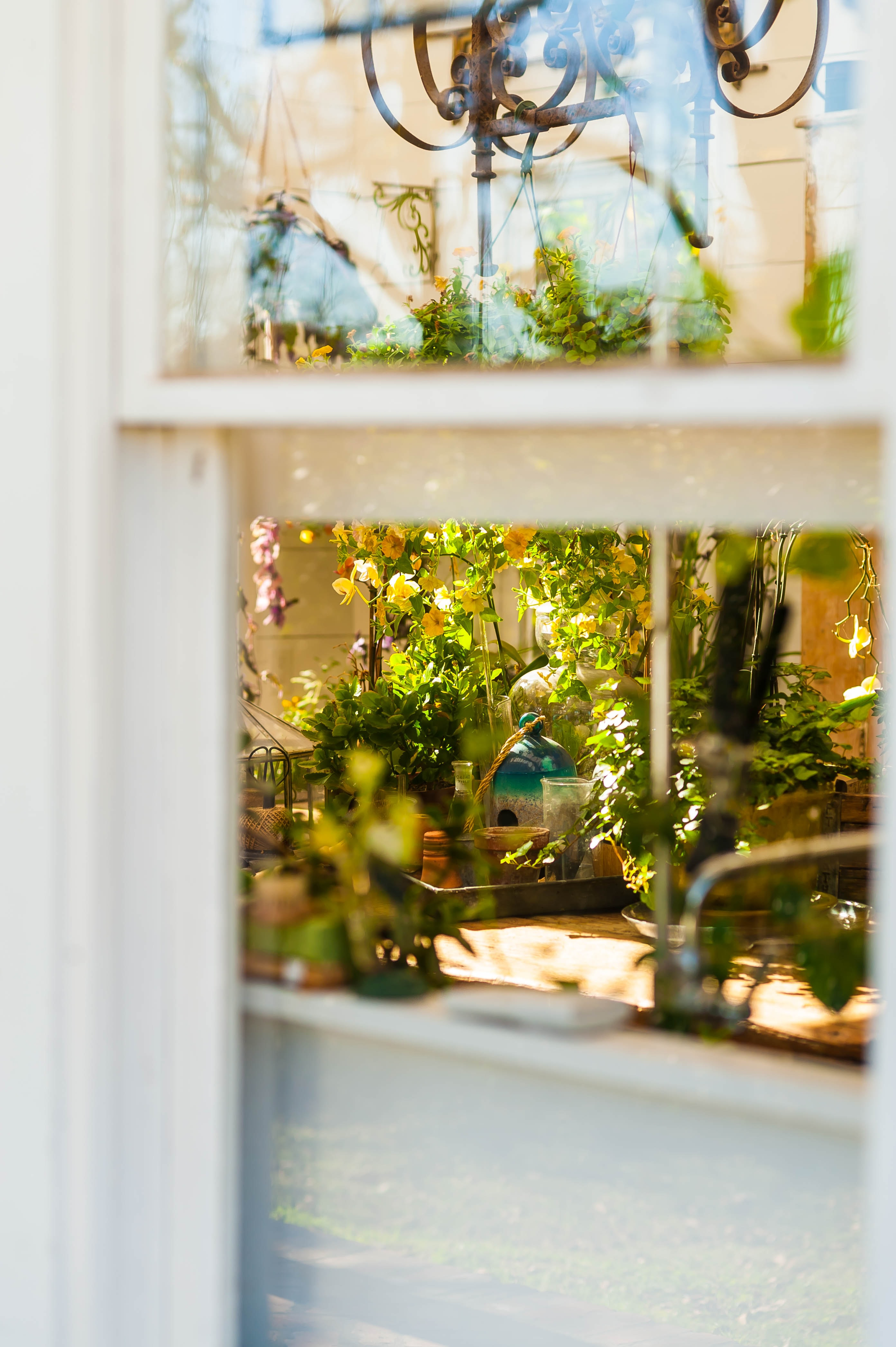 Window Plant Glass And Garden Hd Photo By James Balensiefen