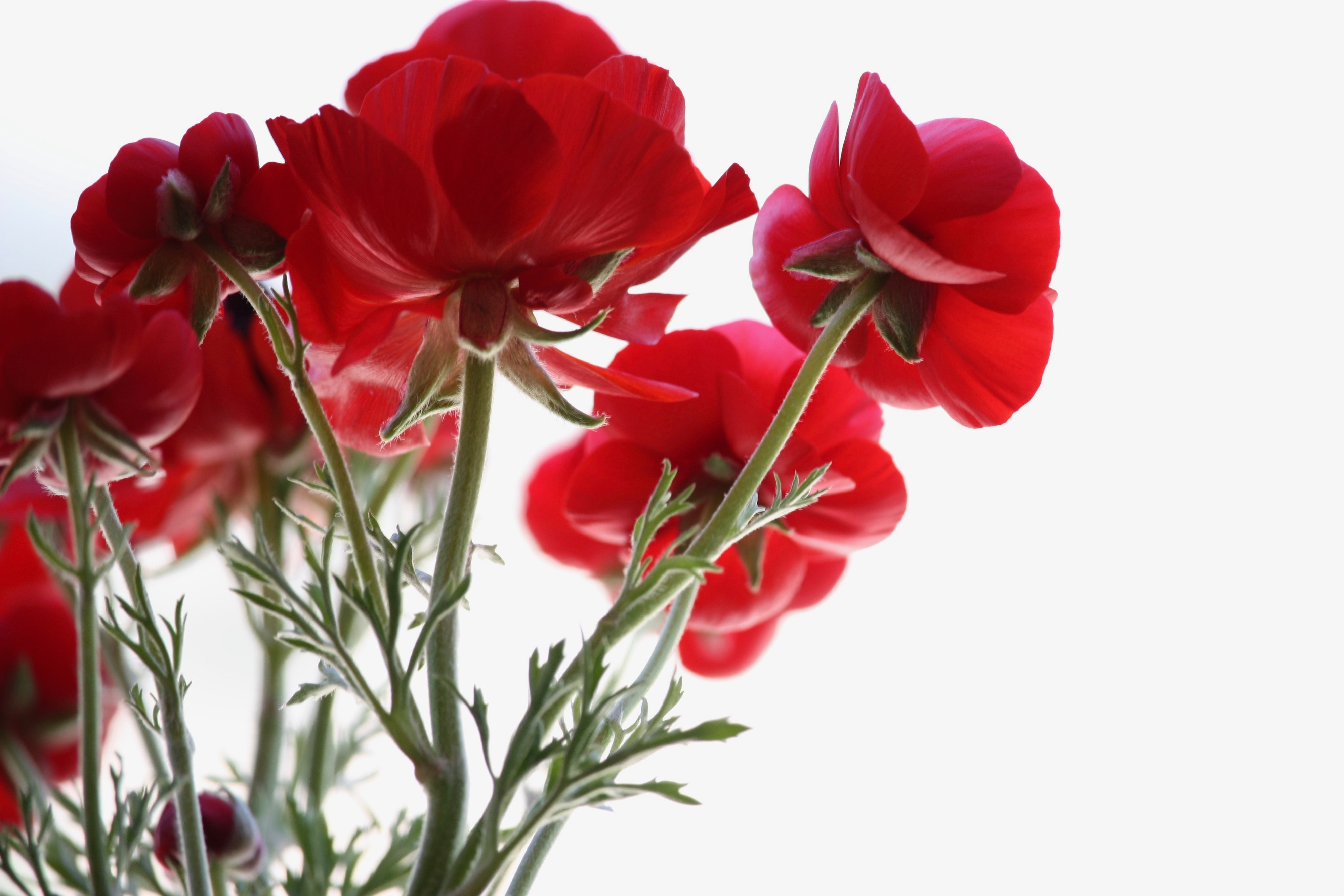 low angle view of red petaled flowers