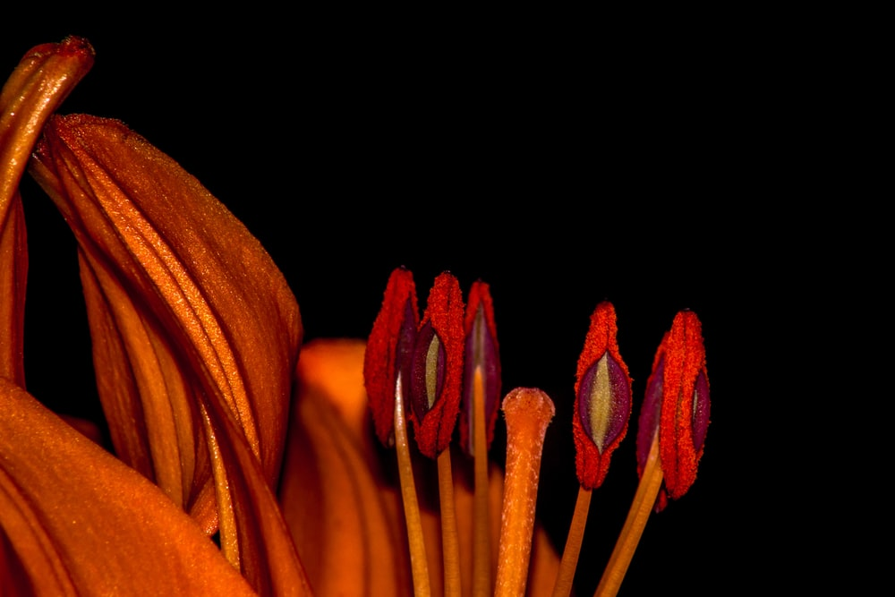 macro photography of red petaled flowers