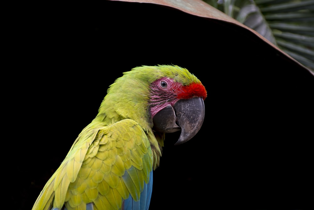 green and blue parrot