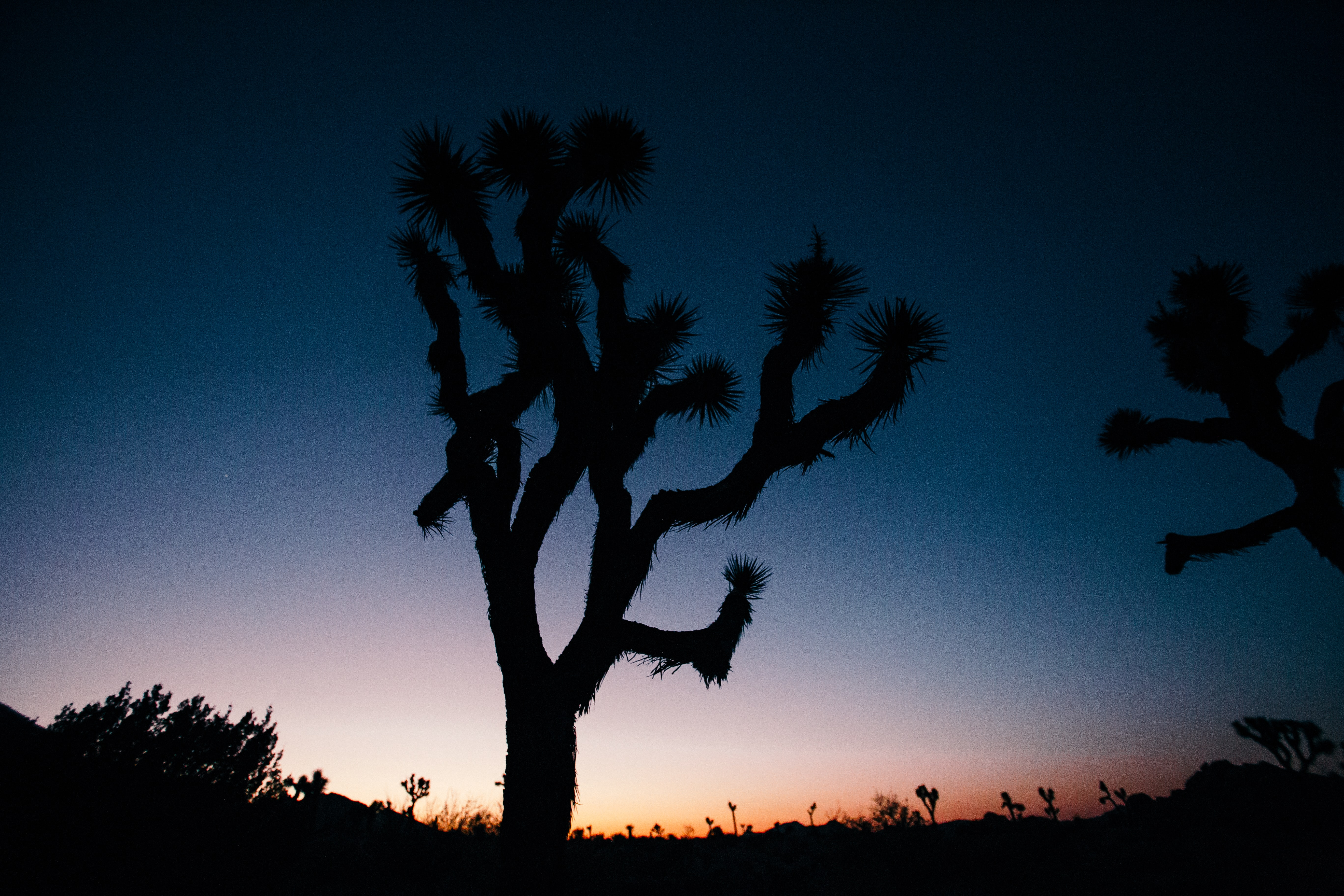 silhouette photograph of cactus