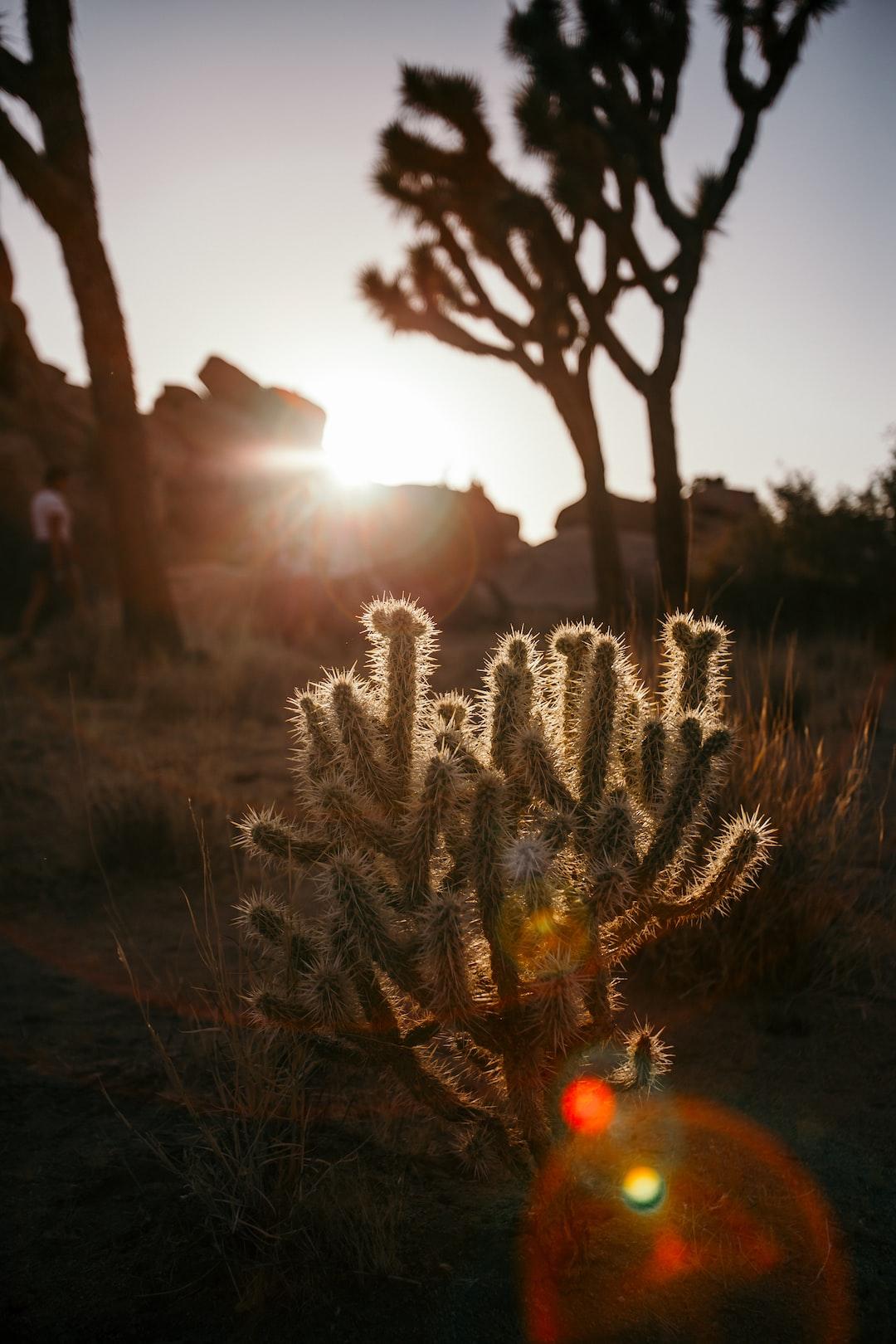 Baby Cactus in the Desert