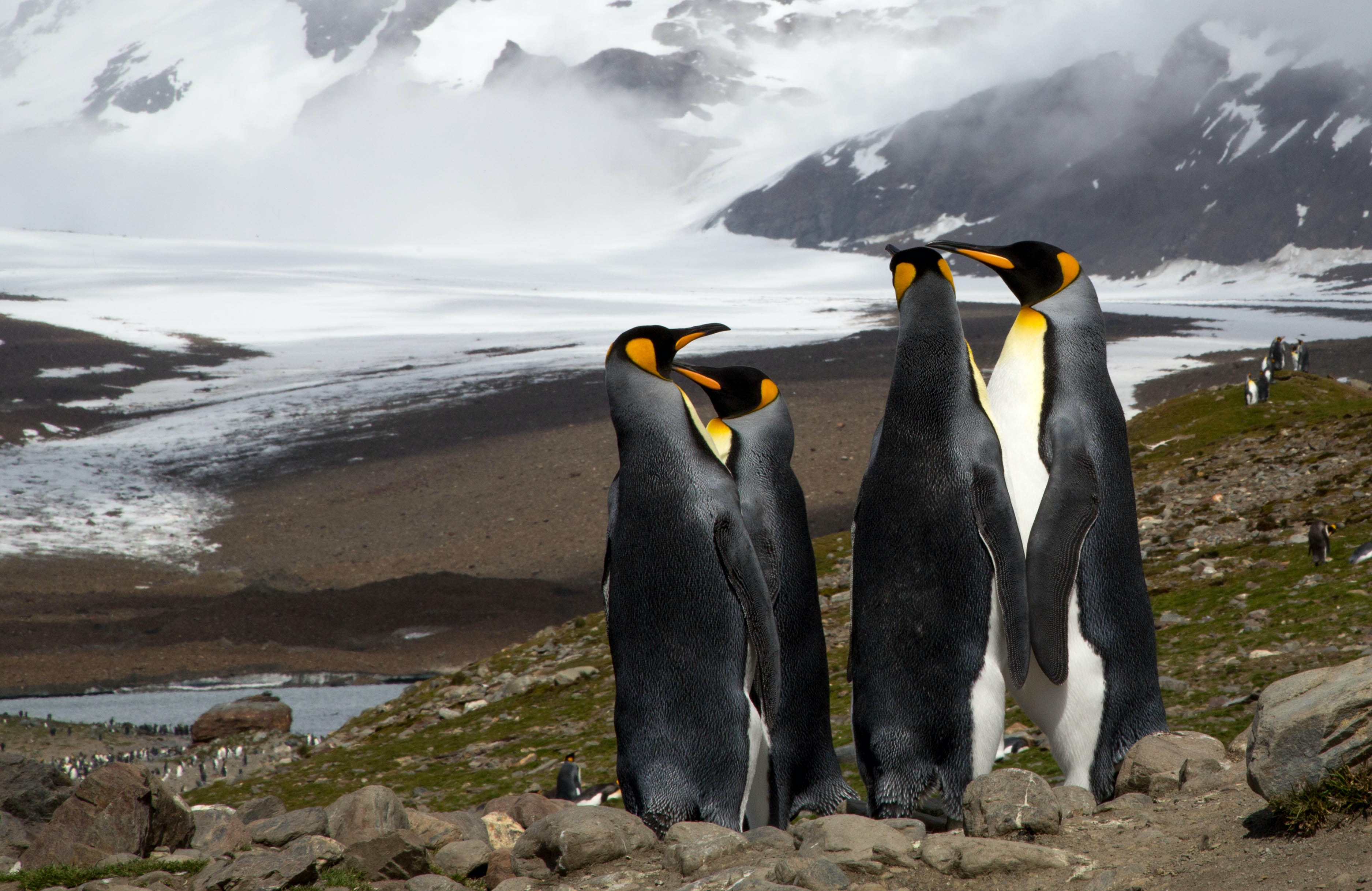 penguins standing on rocky mountain