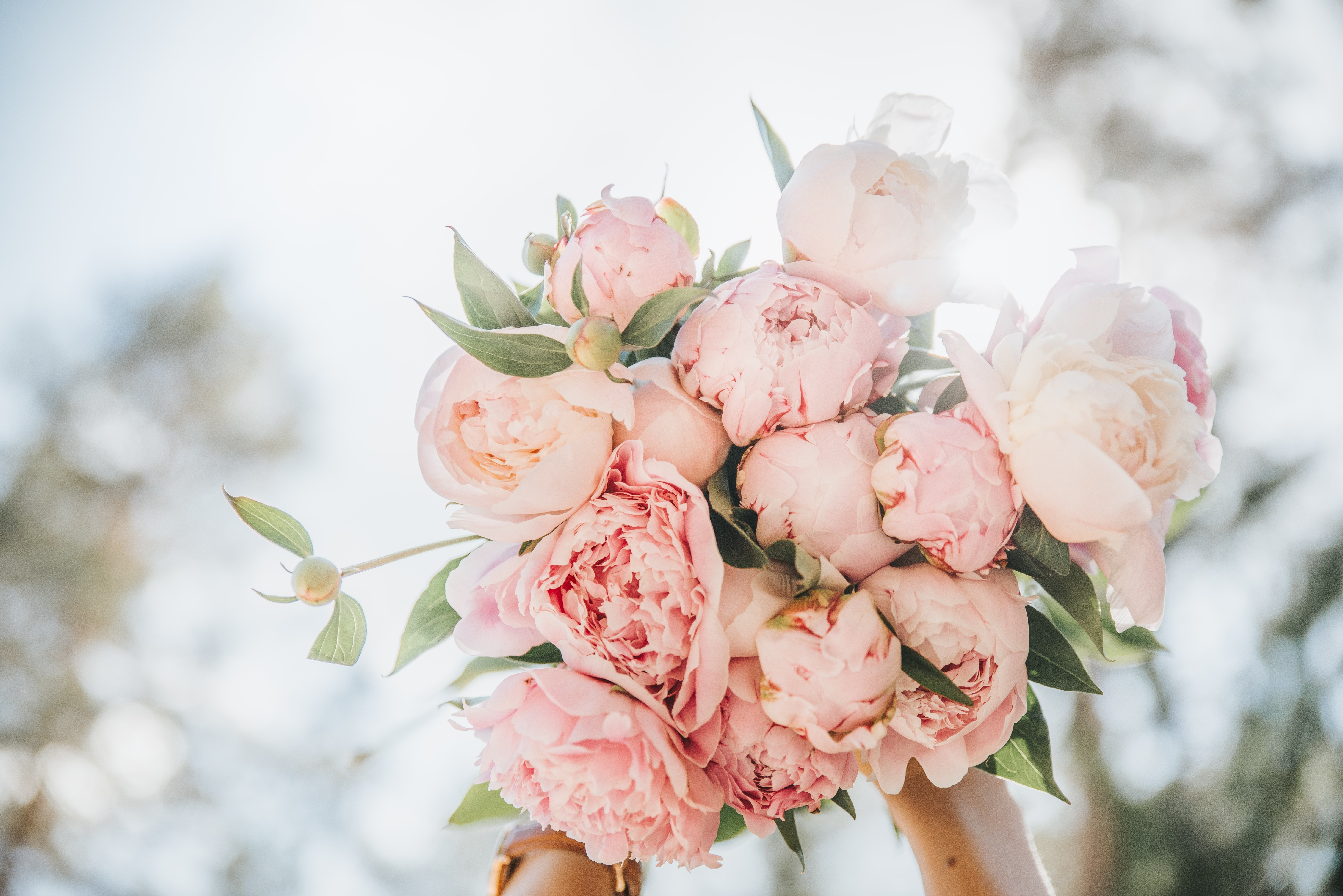 shallow focus photography of bouquet of pink roses