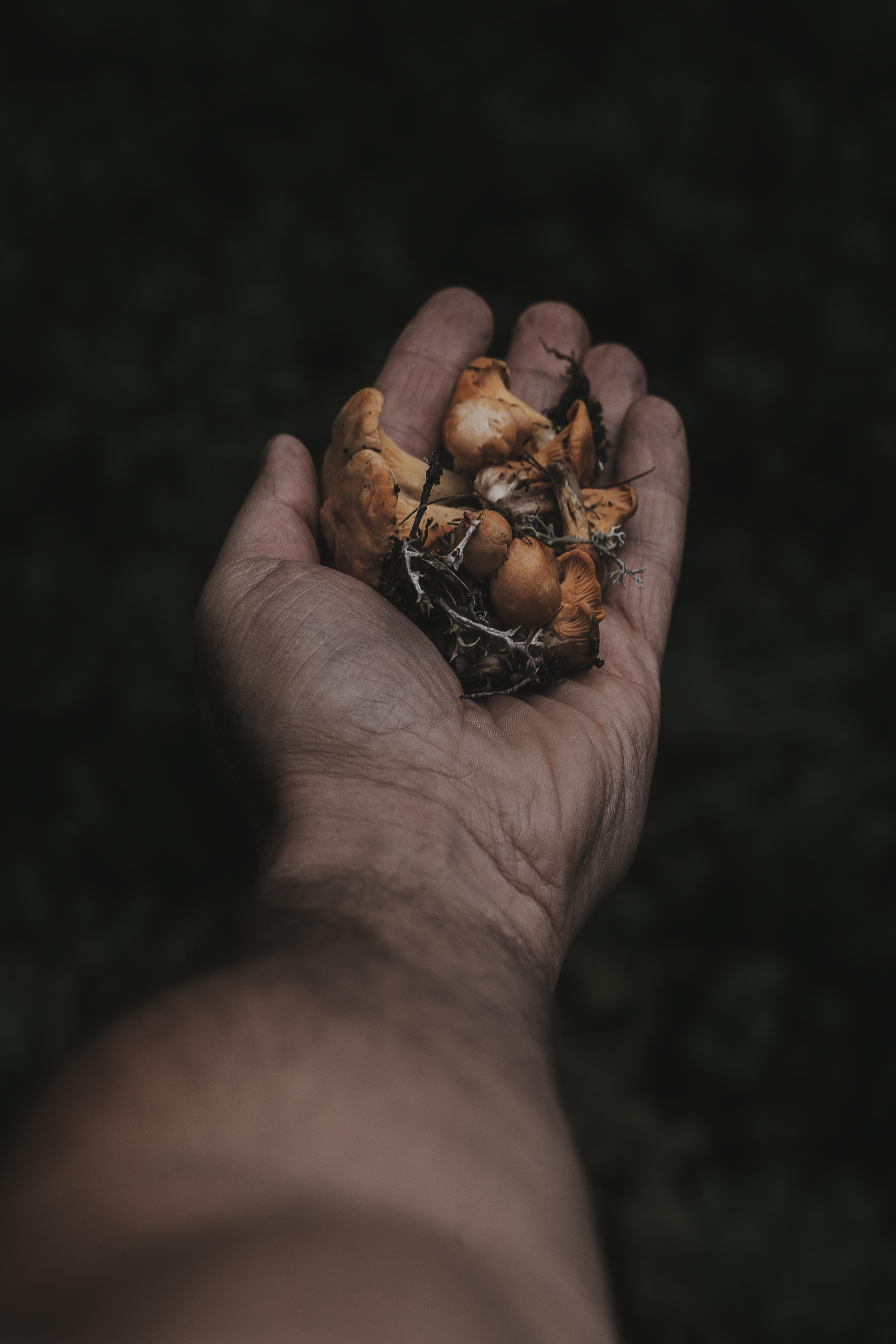 person holding mushrooms