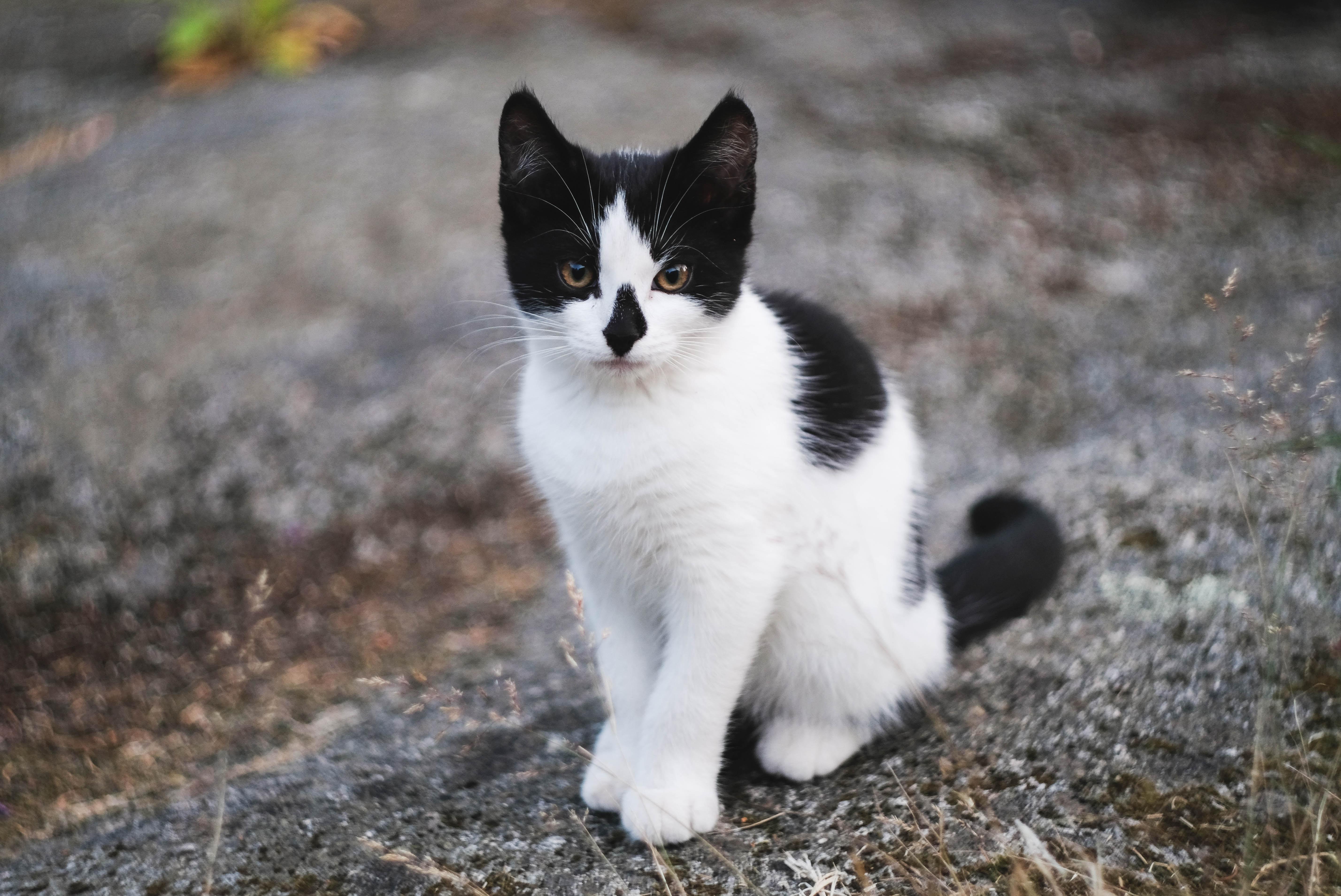 white and black cat on gray soil