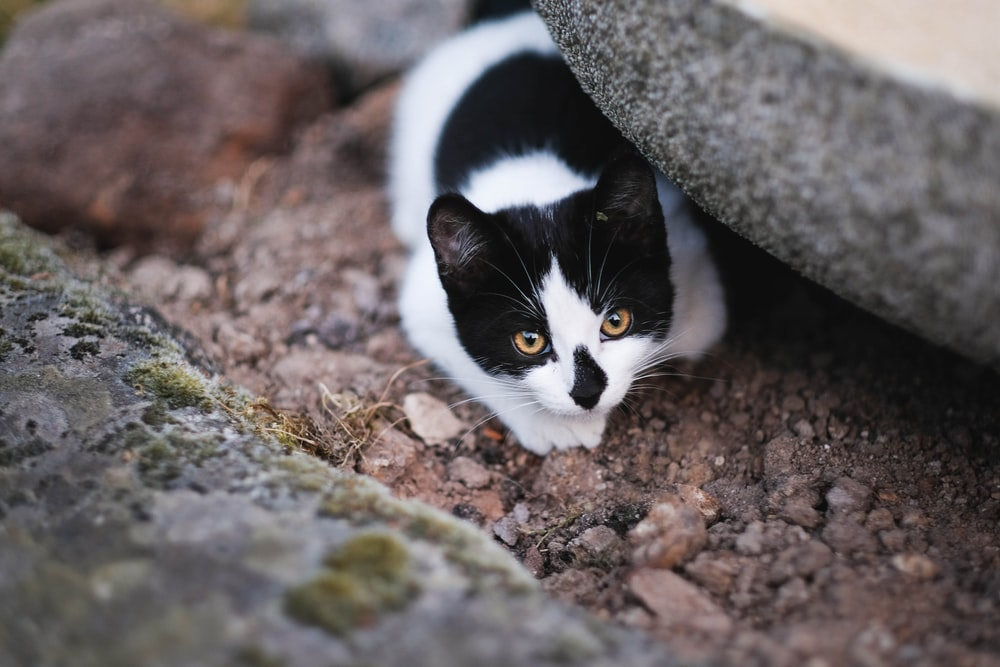 cat hiding on gray rock