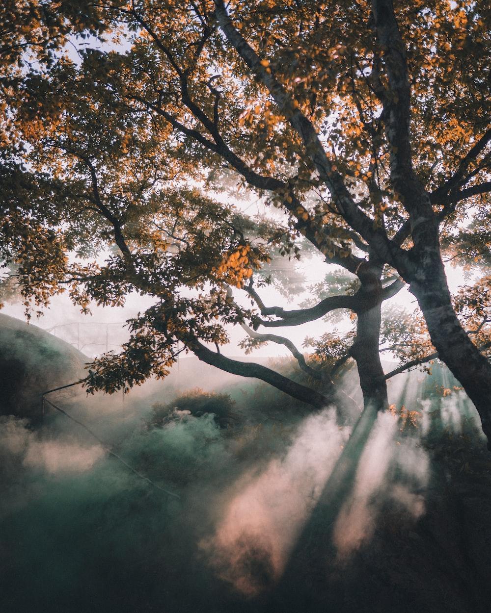 photograph of tree