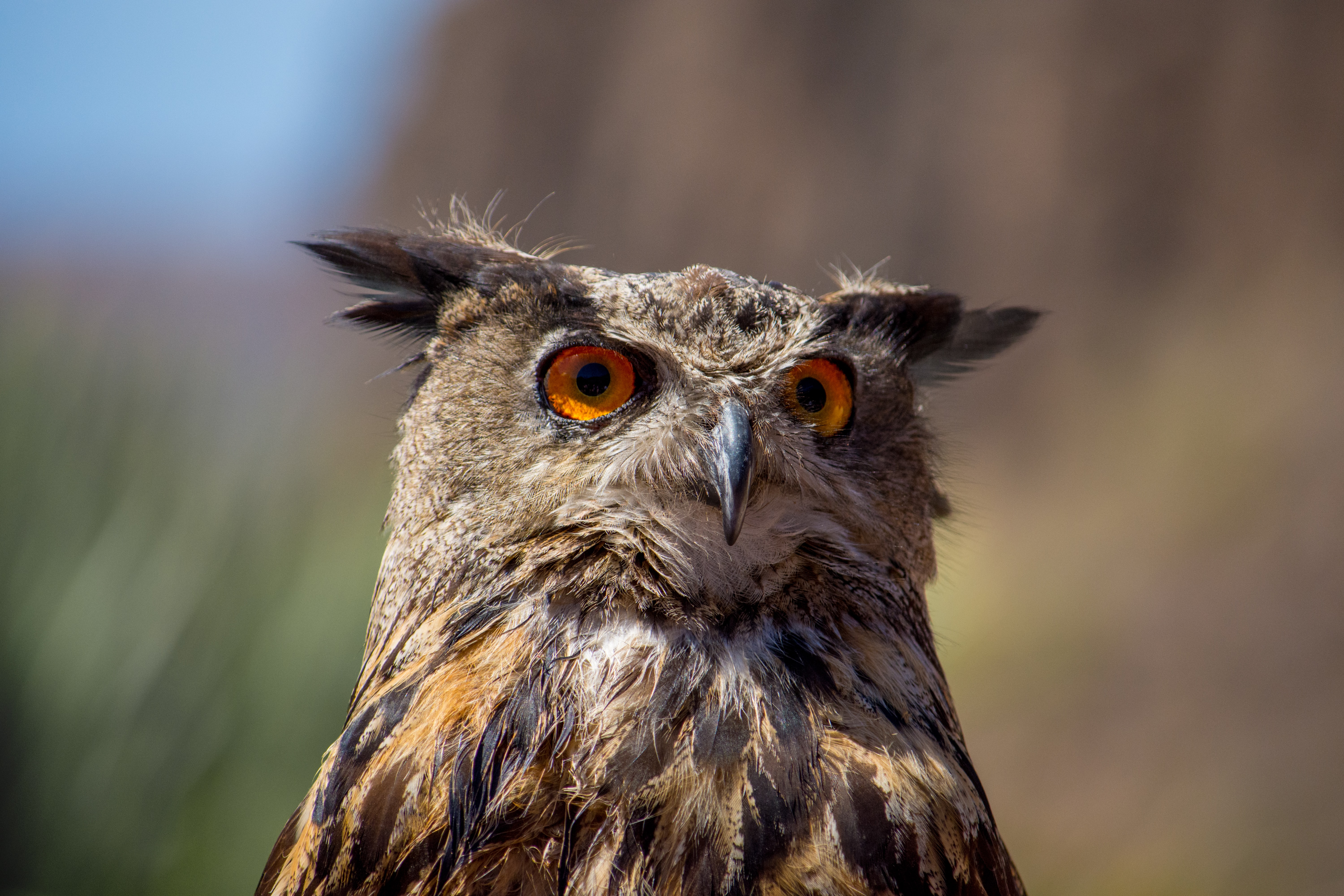 shallow focus photography of owl outdoors
