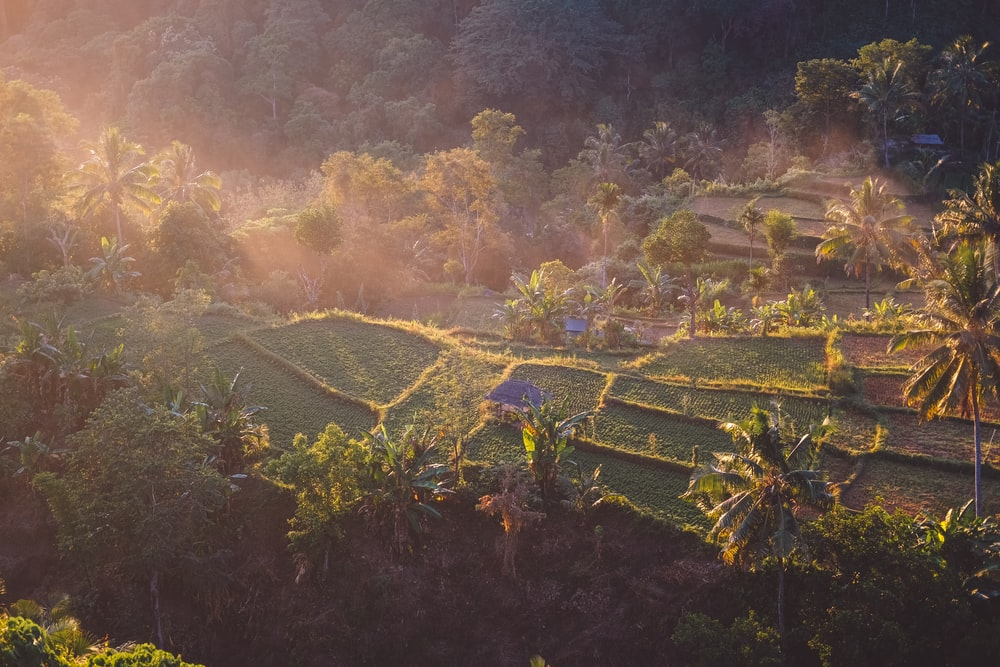 aerial view photography of rice terraces
