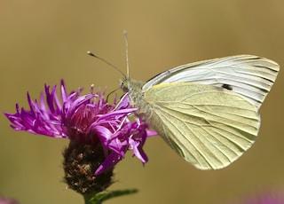 beige butterfly on pink petaled flower