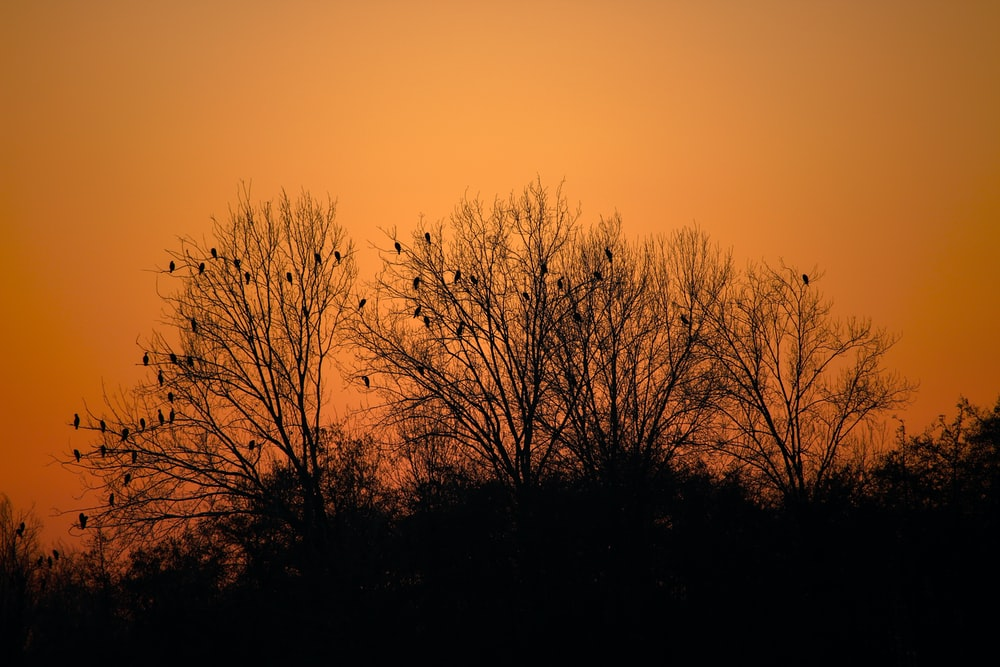 birds perching on tree branch during golden hour