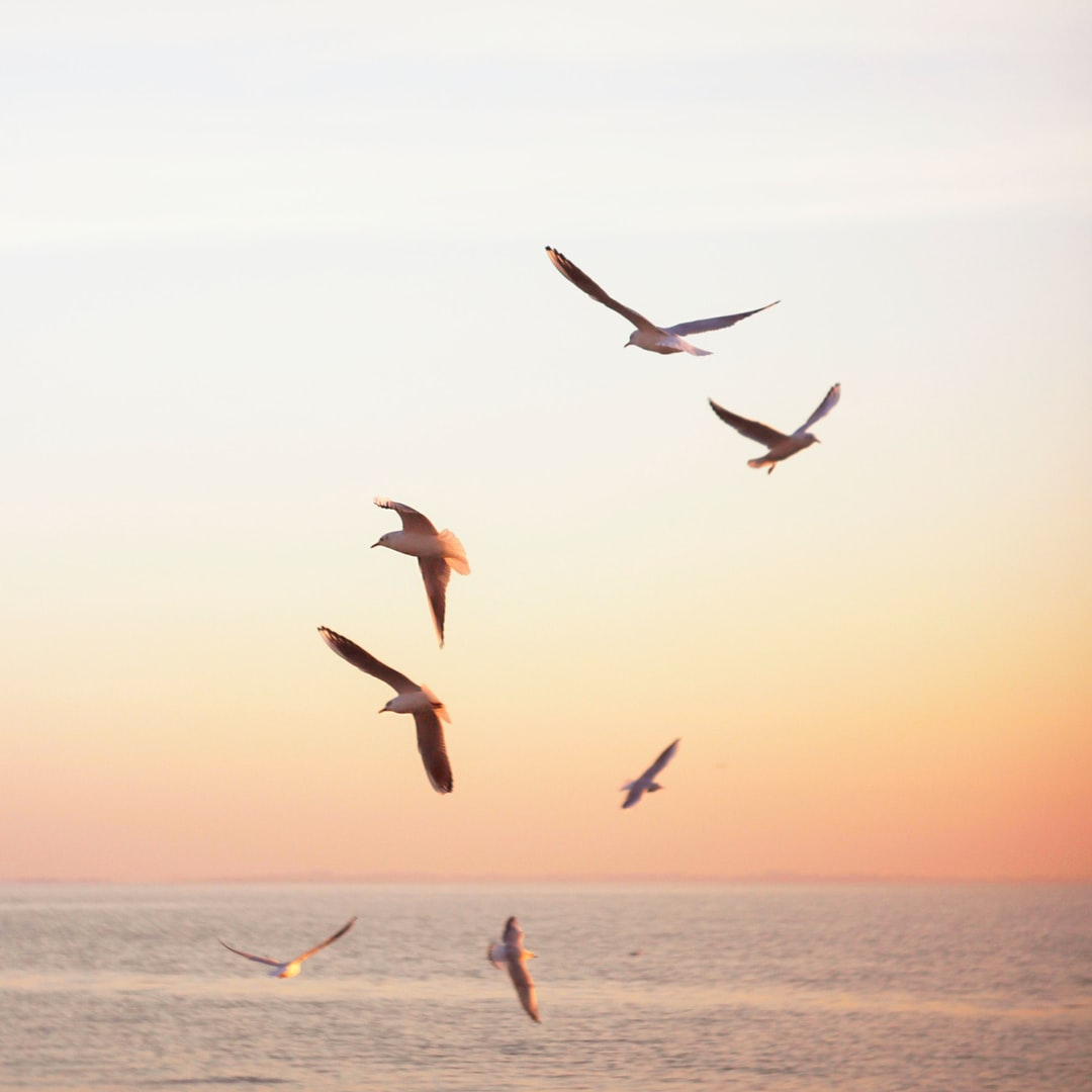 - birds and freedom -