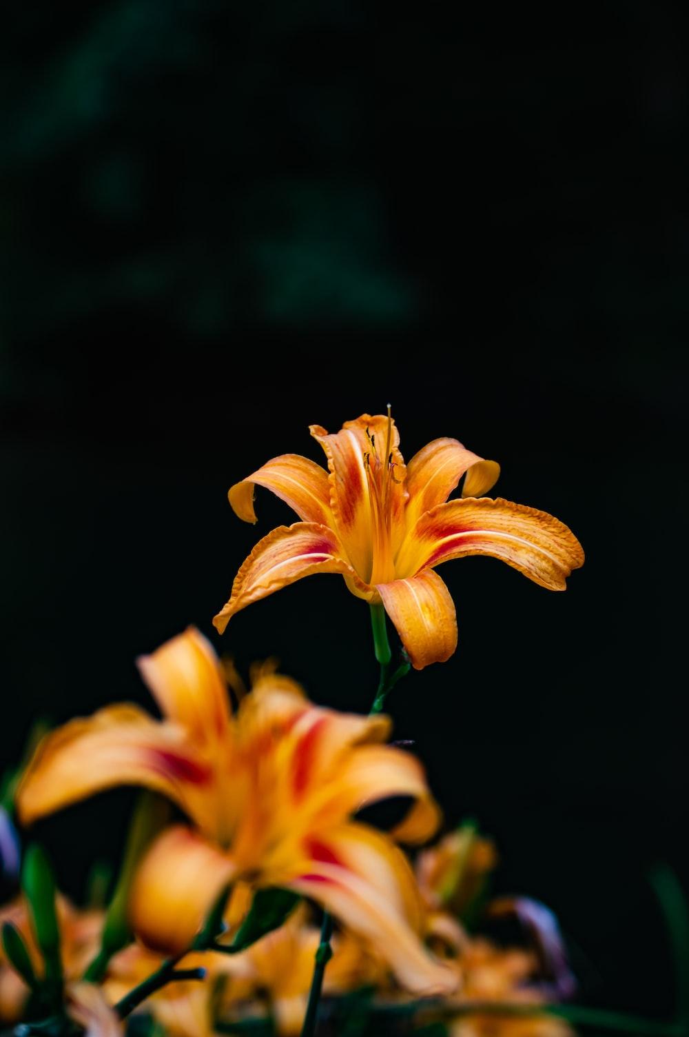 shallow focus photography of orange flower