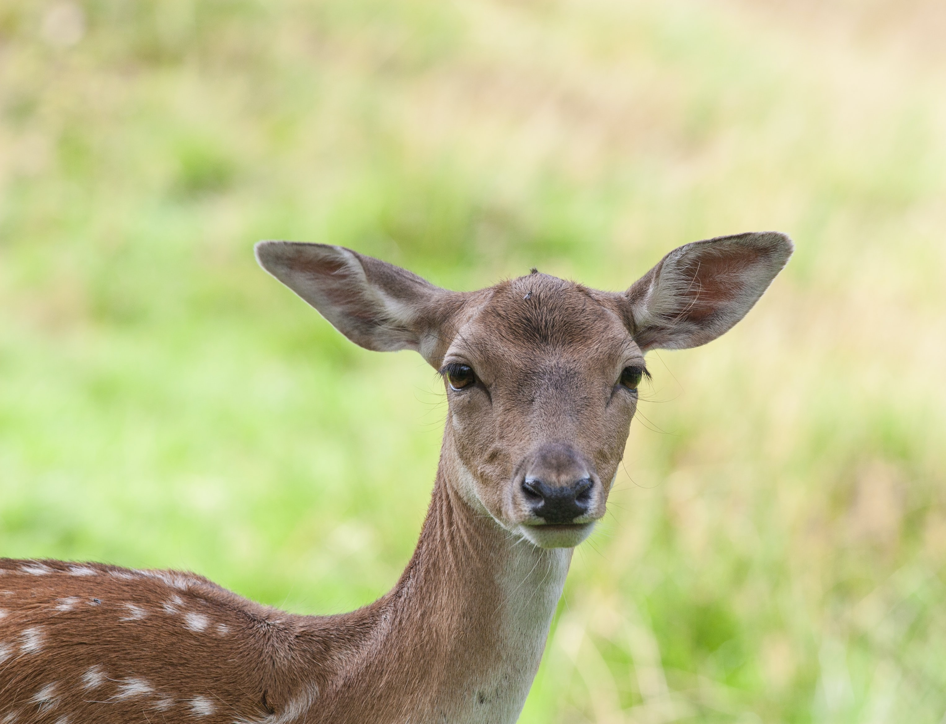 shallow focus photography of deer