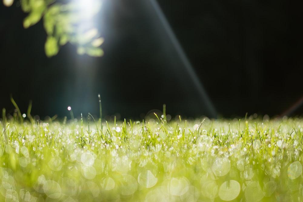 macro photography of green grass field