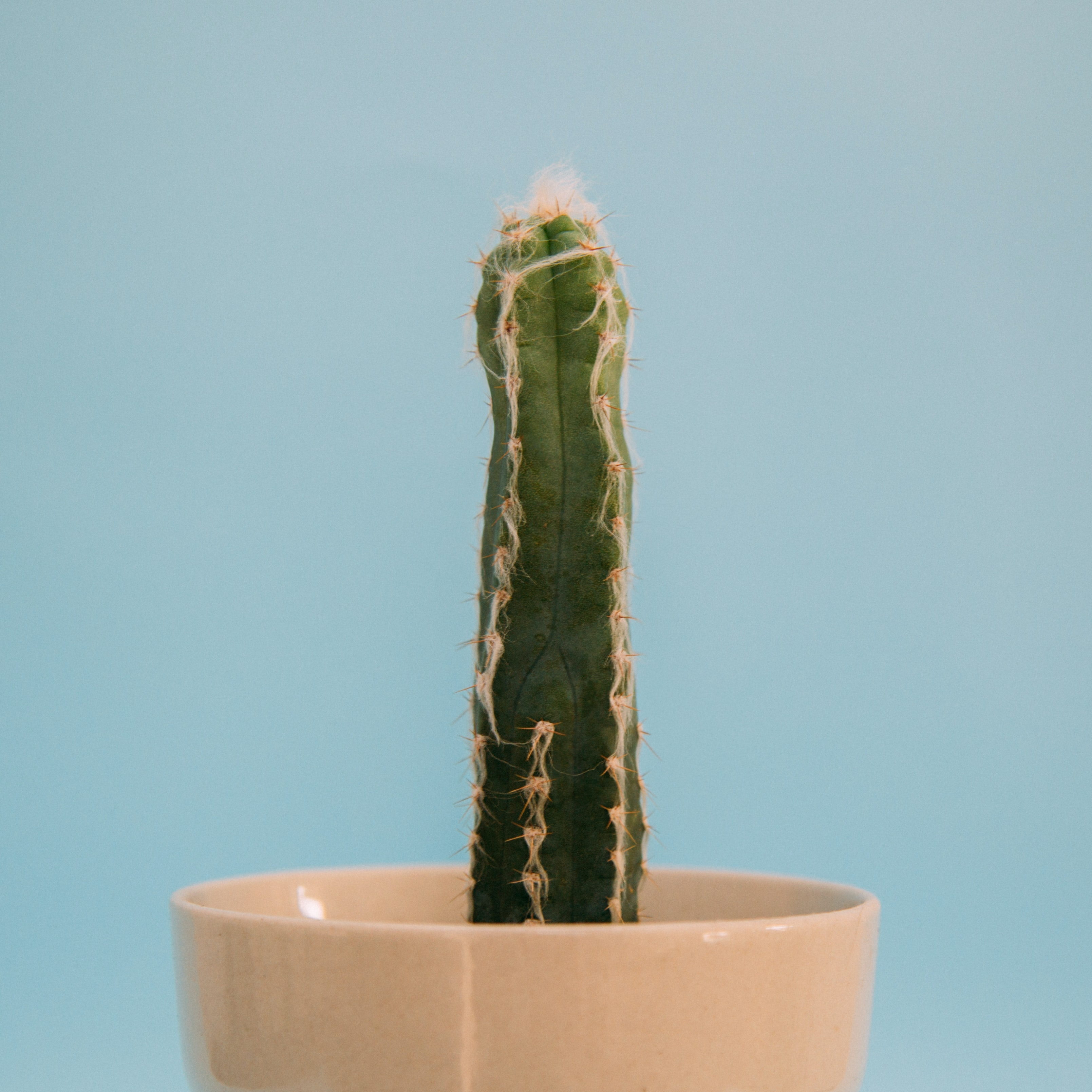 green cactus on white ceramic pot