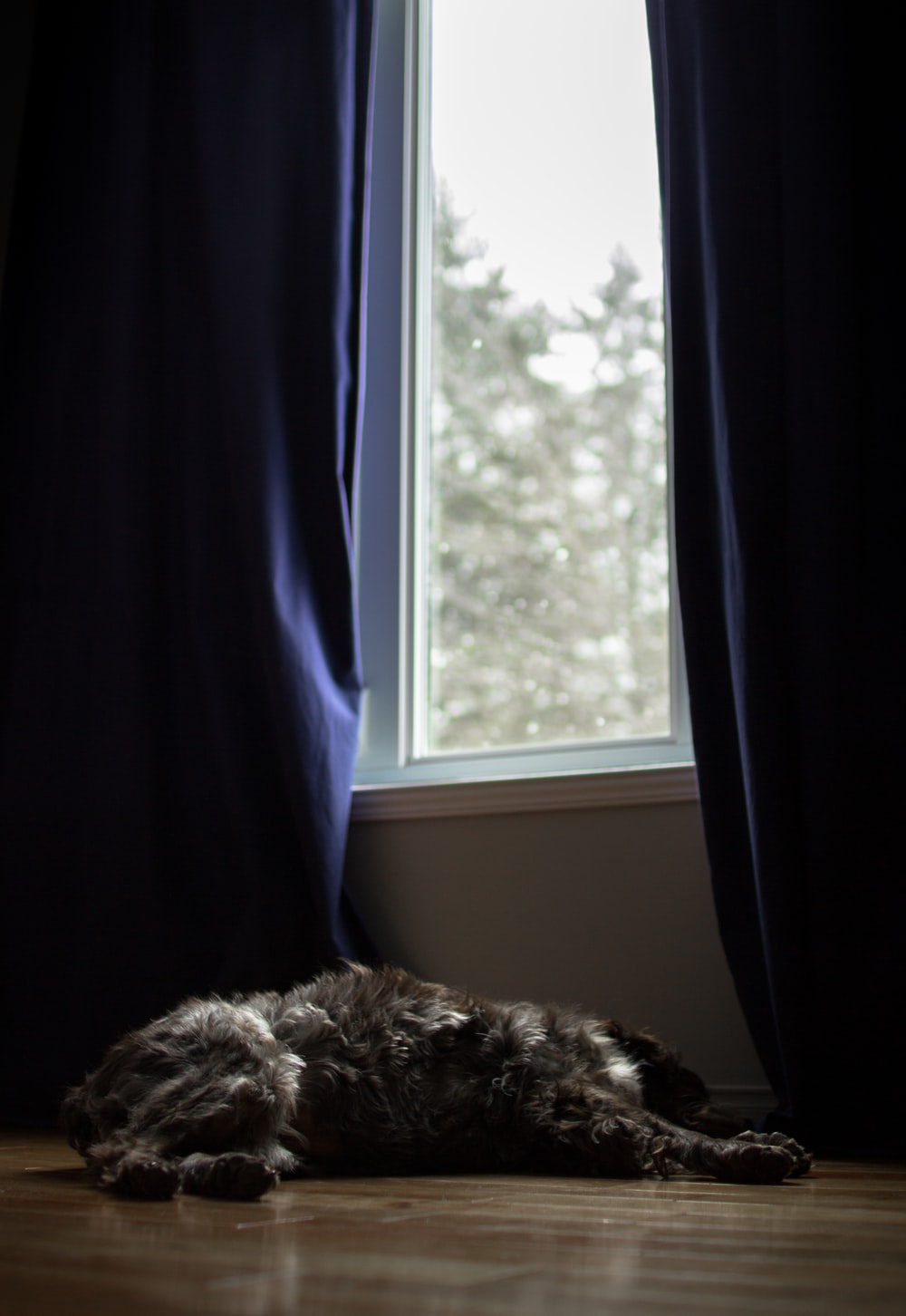 dog resting in front of window