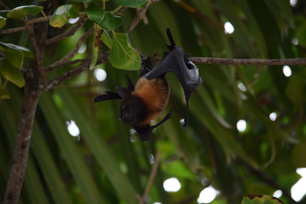 brown and black bat perching on tree