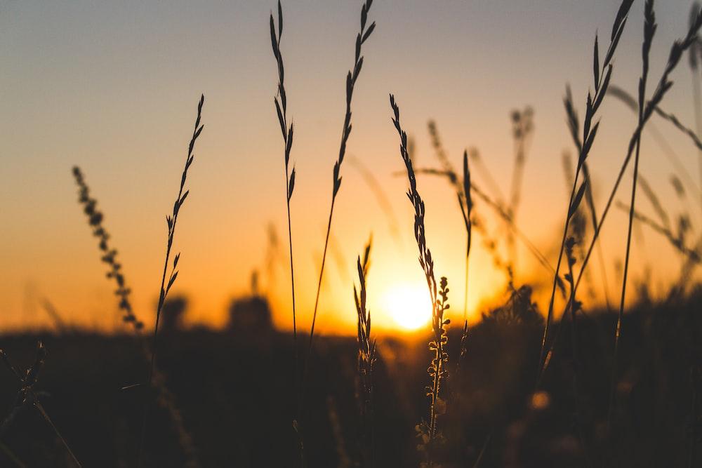 shallow focus photograph of green grass
