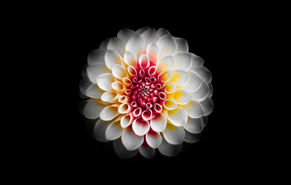 shallow focus photography of white and red flower