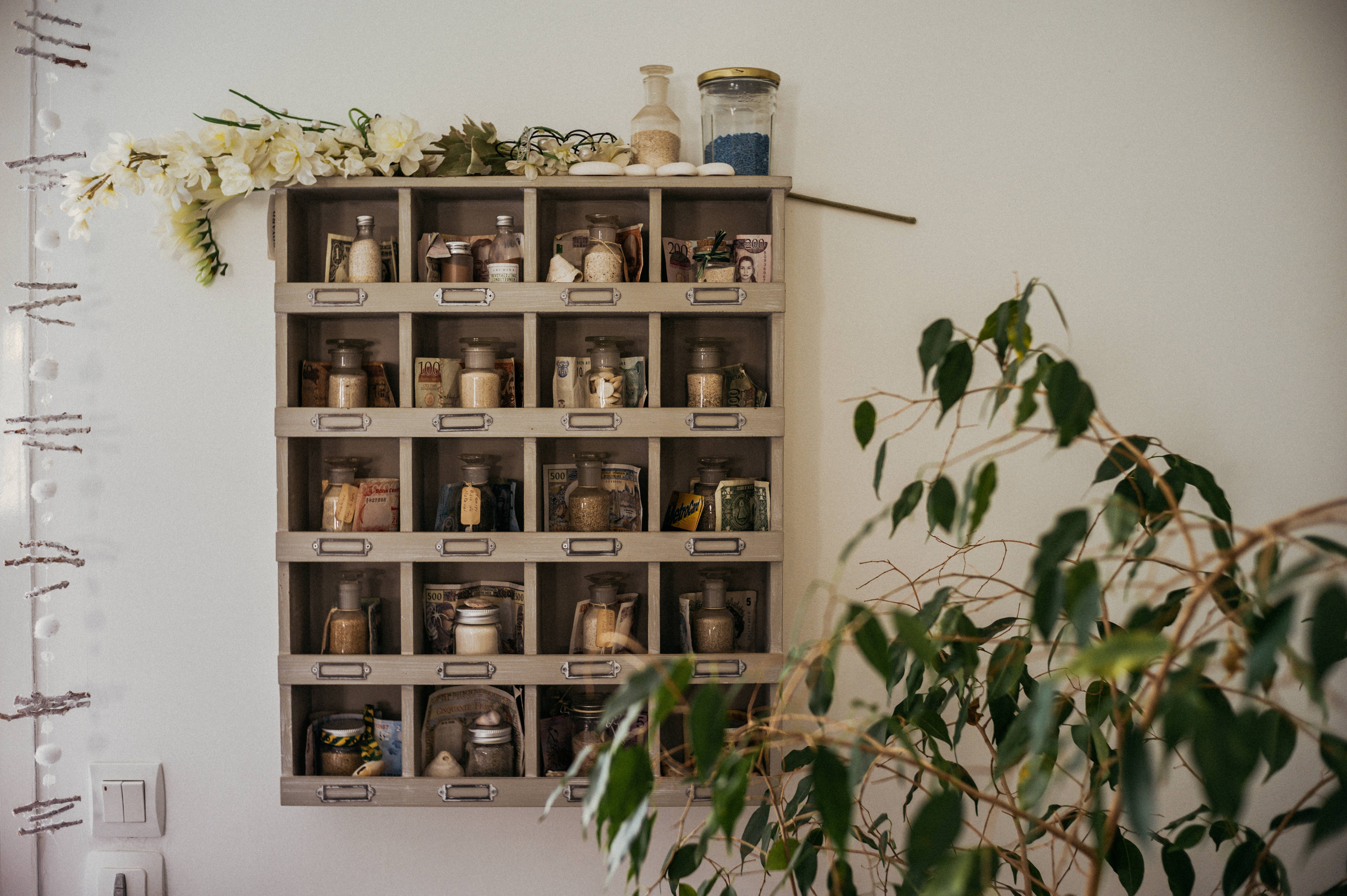 weeping fig plant beside shelf