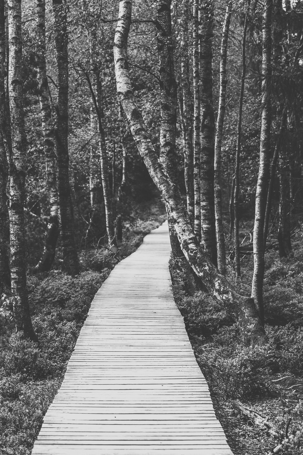 greyscale photo of pathway with trees