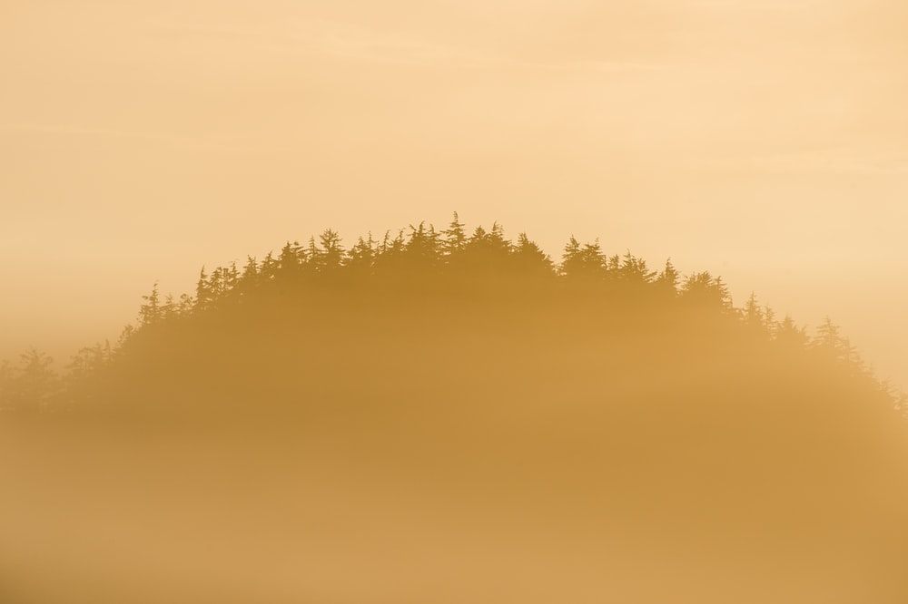silhouette of tree with fogs